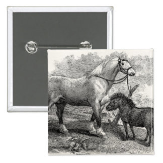Vintage 1800s Clydesdale Horse Highland Pony 15 Cm Square Badge