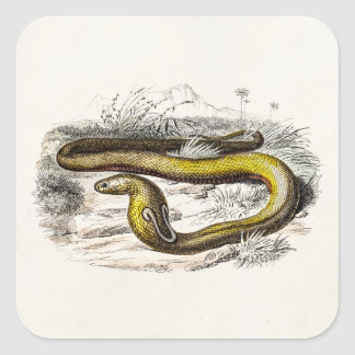 Vintage 1800s Cobra Snake Retro Cobras Drawing Square Sticker