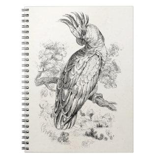 Vintage 1800s Cockatoo Parrot Bird Cockatiel Birds Notebook