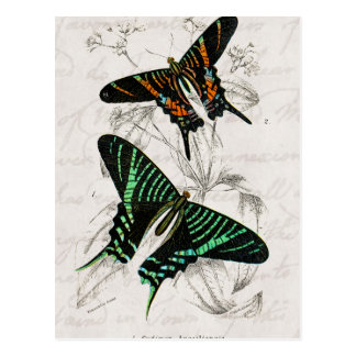 Vintage 1800s Green Orange Swallowtail Butterflies Postcard