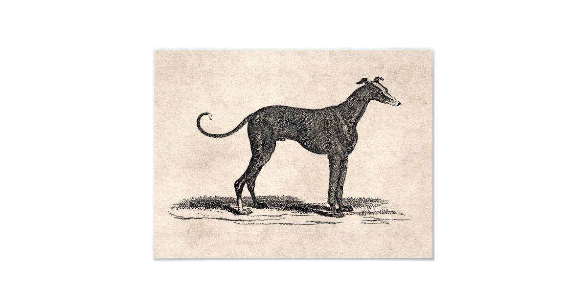 Greyhound Ca Print At Home