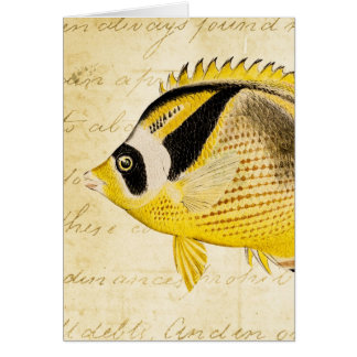 Vintage 1800s Hawaiian Butterfly Fish Illustration Card