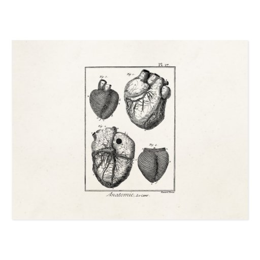 Vintage 1800s Heart Retro Cardiac Anatomy Hearts Postcards