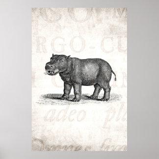 Vintage 1800s Hippopotamus Illustration - Hippos Poster