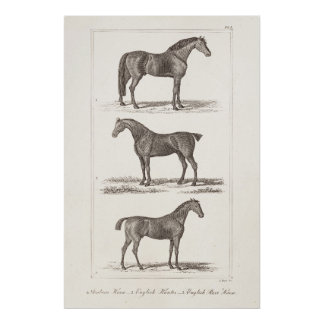 Vintage 1800s Horse Old Breeds Arabian Hunter Race Poster