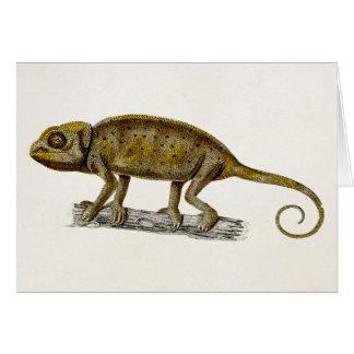 Vintage 1800s Iguana Lizard Illustration Iguanas Card