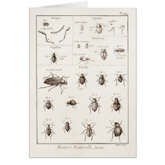 Vintage 1800s Insects Bug Beetles Illustration Card