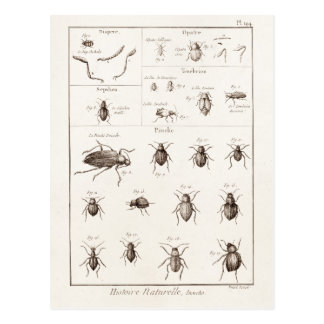Vintage 1800s Insects Bug Beetles Illustration Postcard