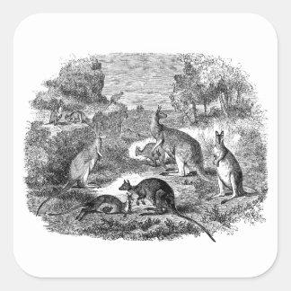 Vintage 1800s Kangaroo - Australian Kangaroos Stickers