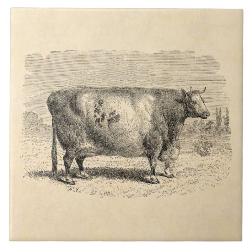6 Etl Business Requirements Specification Template Reyri: Vintage 1800s Large Durham Cow Retro Cows Template