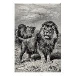 Vintage 1800s Lion Lionesse Big Cat Illustration Poster