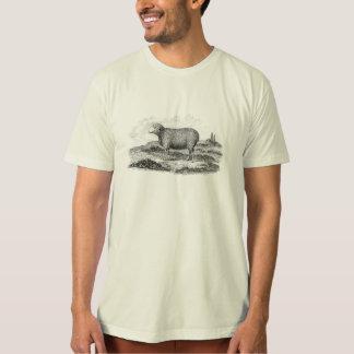 Vintage 1800s Merino Sheep Ewe Lamb Template T-Shirt