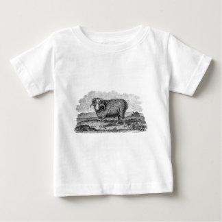 Vintage 1800s Merino Sheep Ram Lamb Template Baby T-Shirt