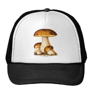 Vintage 1800s Mushroom Edible Mushrooms Template Cap