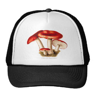 Vintage 1800s Mushroom Red Mushrooms Template Cap