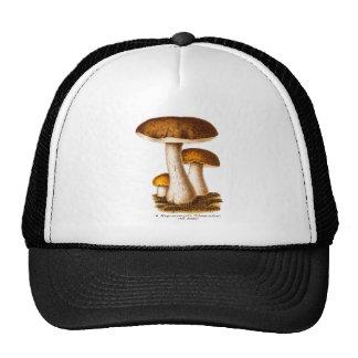 Vintage 1800s Mushroom Scaber Brown Mushrooms Cap