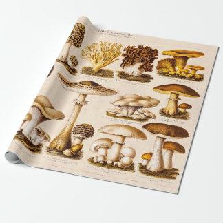 Vintage 1800s Mushroom Variety  Mushrooms Template Wrapping Paper