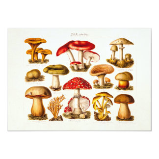 Vintage 1800s Mushroom Variety Red Mushrooms 13 Cm X 18 Cm Invitation Card