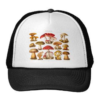 Vintage 1800s Mushroom Variety Red Mushrooms Cap