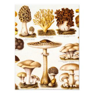Vintage 1800s Mushroom Variety Template Photo