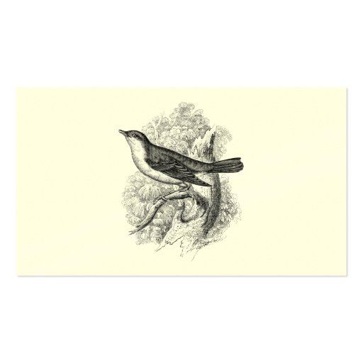 Vintage 1800s Nightingale Bird Illustration Birds Business Cards