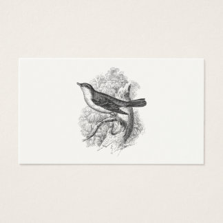 Vintage 1800s Nightingale Bird Illustration Birds Business Card