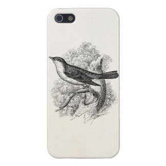 Vintage 1800s Nightingale Bird Illustration Birds iPhone 5 Covers