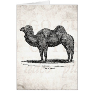 Vintage 1800s Old Camel Illustration Retro Camels Card