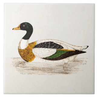 Vintage 1800s Old Drake Duck Illustration - Ducks Large Square Tile