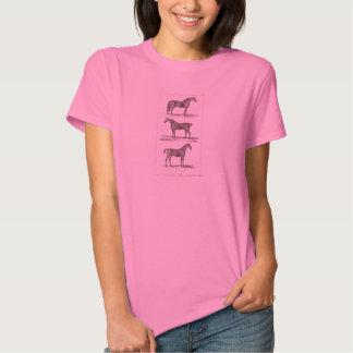 Vintage 1800s Old Horse Breeds Arabian Hunter Race T Shirts