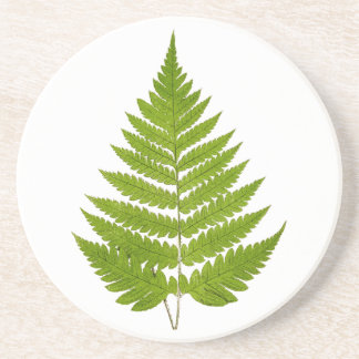 Vintage 1800s Olive Green Fern Leaf Template Coaster