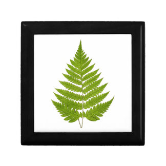 Vintage 1800s Olive Green Fern Leaf Template Gift Box
