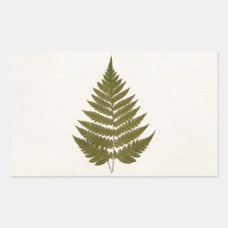 Vintage 1800s Olive Green Fern Leaf Template Rectangular Sticker