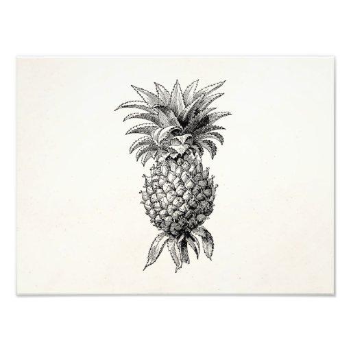 Vintage 1800s Pineapple Illustration Pineapples Photo