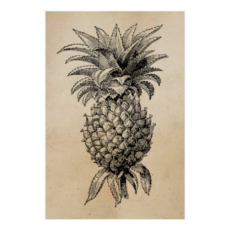Vintage 1800s Pineapple Illustration Pineapples Poster