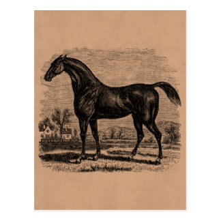 Vintage 1800s Race Horse Retro Thoroughbred Horses Postcard