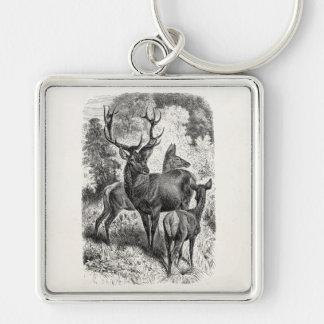 Vintage 1800s Red Deer Illustration Stag Doe Fawn Key Ring