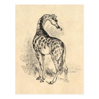 Vintage 1800s Retro GiraffeIllustration Parchment Postcard