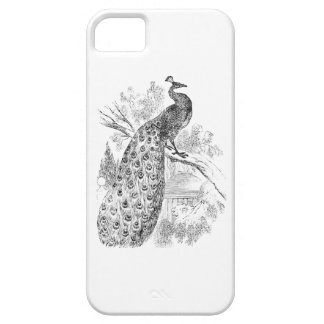 Vintage 1800s Retro Peacock Illustration Template iPhone 5 Covers