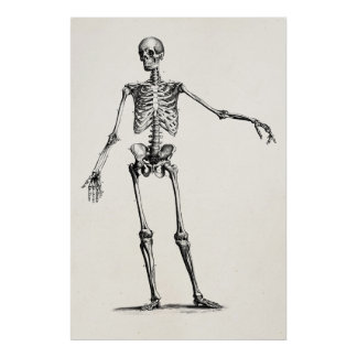 Vintage 1800s Skeleton Retro Anatomy Skeletons Poster