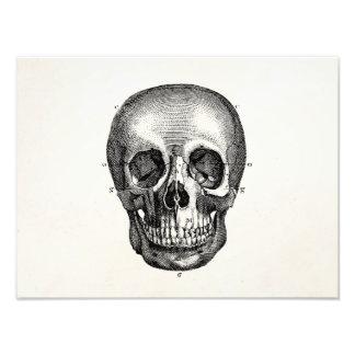 Vintage 1800s Skull Retro Skulls Skeleton Photo Print