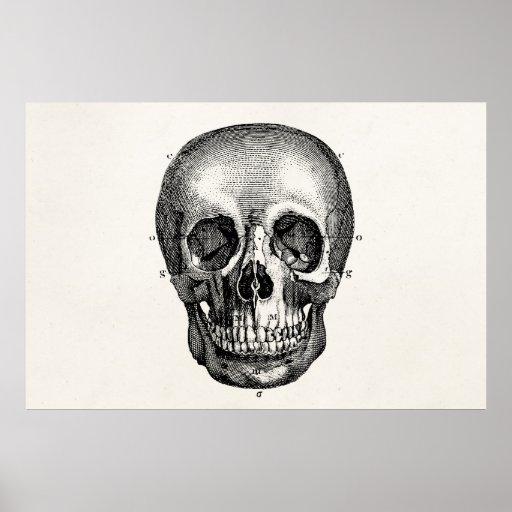 Vintage 1800s Skull Retro Skulls Skeleton Print