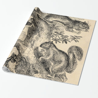Vintage 1800s Squirrels Illustration - Squirrel Wrapping Paper