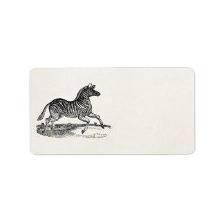 Vintage 1800s Striped Zebra Illustration Zebras Label