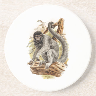 Vintage 1800s Woolly Monkey Old Wooly Monkeys Coaster
