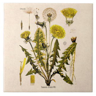 Vintage 1800s Yellow Dandelion Gone to Seed Floral Large Square Tile
