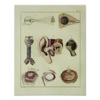 Vintage 1820 Eye Ear Anatomy Art Print