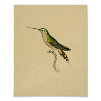Vintage 1830 Hummingbird Print Green Black