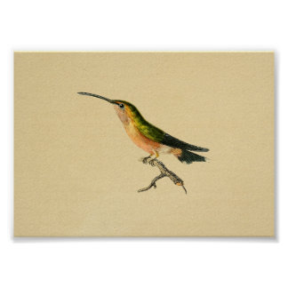 Vintage 1830 Hummingbird Print Green Orange