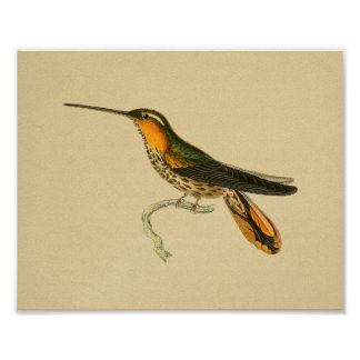 Vintage 1830 Hummingbird Print Orange